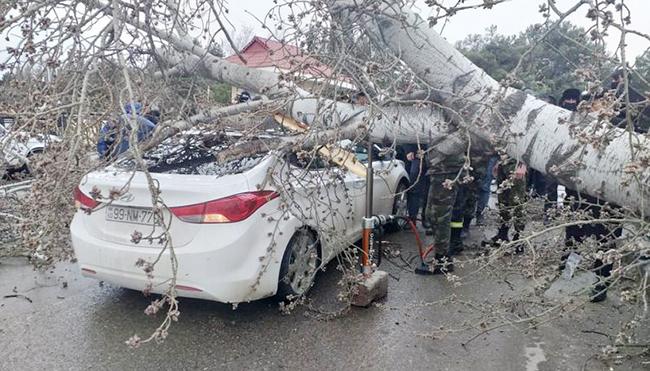 Külək ağacı avtomobilin üzərinə aşırdı