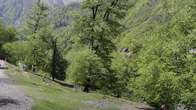 Azərbaycan meşə yanğınlarına hazırdırmı...