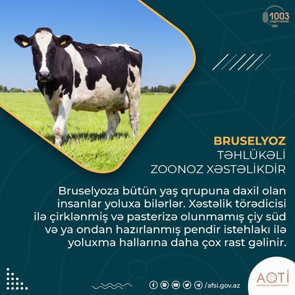 Bruselyoz təhlükəli zoonoz xəstəlikdir